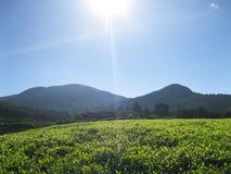 Naturlig kall morgon Royaltyfria Bilder