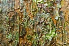 Naturlig kamouflage arkivfoto