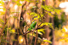 naturlig kamouflage Fotografering för Bildbyråer