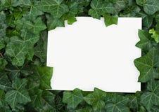 naturlig kantmurgröna Royaltyfri Fotografi