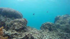 Naturlig korallrev, marin- livsmiljöer arkivfilmer