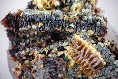Naturlig läcker organisk honung royaltyfria bilder