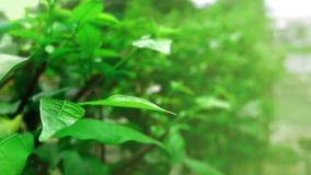 Naturlig landskapbakgrund för gröna växter Fotografering för Bildbyråer