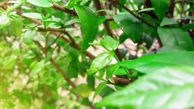 Naturlig landskapbakgrund för gröna växter Arkivfoto
