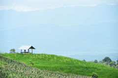 Naturlig landskapsikt av den havrefältet och risfältet Royaltyfri Fotografi