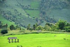 Naturlig landskapsikt av den havrefältet och risfältet Arkivfoton