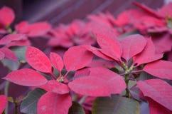 Naturlig leaf Royaltyfri Bild