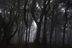 naturlig liggande Mörk skog med vit dimma arkivfoton
