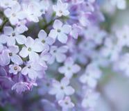 Naturlig lila bakgrund Arkivbilder