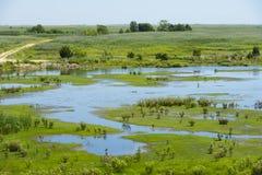 Naturlig livsmiljö i våtmarkerna Arkivbilder