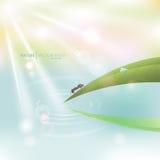 Naturlig ljus bakgrund för vektormakro Grönt gräs med dagg och Arkivfoto