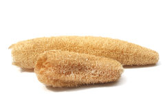 Naturlig Luffa svamp Arkivbild