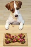 Naturlig mat för hundkapplöpning Arkivfoto