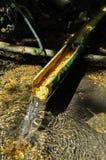Naturlig matstrupe från bambu arkivfoto