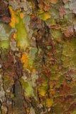 Naturlig militär kamouflage på träd Royaltyfri Fotografi