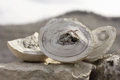 Naturlig mineral Royaltyfria Bilder
