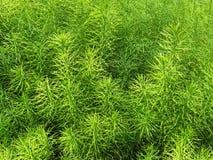 Naturlig modell för grönt gräs i vår Arkivfoton