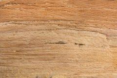 Naturlig modell för trädtexturbakgrund i brun färg royaltyfria bilder