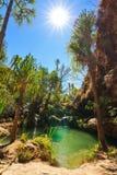 Naturlig oas Isalo Arkivbilder