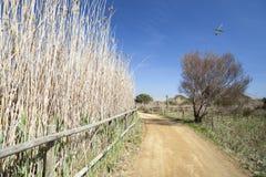 Naturlig områdesdeltaLlobregat flod, nästan flygplats El Prat-Barc Arkivbild