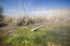 Naturlig områdesdeltaLlobregat flod, nästan flygplats El Prat-Barc Royaltyfri Foto