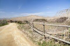 Naturlig områdesdeltaLlobregat flod, nästan flygplats El Prat-Barc Royaltyfria Foton