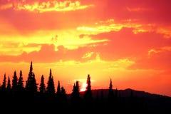 Naturlig orange solnedgång över skogen Arkivbild