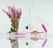 Naturlig organisk botanik och vetenskaplig glasföremål, alternativ örtmedicin, naturliga skönhetsprodukter för hudomsorg Arkivbild