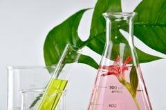 Naturlig organisk extraktion och gröna växt- sidor, lösning för blommaaromextrakt arkivfoto