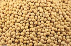 Soybeanbakgrund Royaltyfri Fotografi