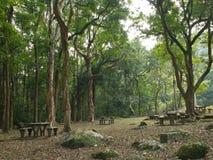 naturlig park royaltyfri bild
