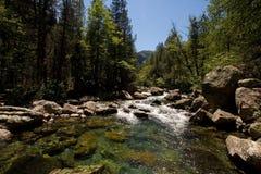 naturlig park Arkivbild