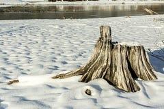 Naturlig plats med vit snö och en trädstubbe Royaltyfri Bild