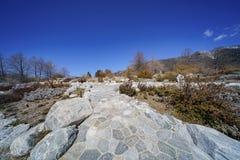 Naturlig plats runt om eken Glen Preserve arkivfoto