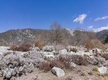Naturlig plats runt om eken Glen Preserve fotografering för bildbyråer
