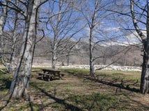 Naturlig plats runt om eken Glen Preserve royaltyfria bilder