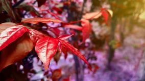 Naturlig röd växtlandskapbakgrund Royaltyfri Foto