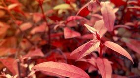 Naturlig röd växtlandskapbakgrund Royaltyfria Foton