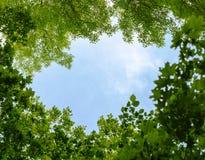 Naturlig ram av träd över blå himmel Royaltyfri Foto
