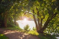 Naturlig ram av träd med linssignalljuset royaltyfri fotografi