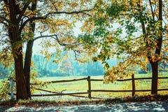 Naturlig ram med stora träd i solig höstdag arkivbild
