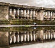 Naturlig reflexion arkivfoto