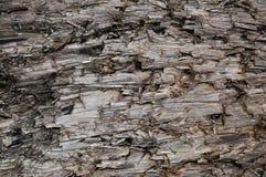 Naturlig riden ut Grey Taupe Brown Cut Tree stubbetextur, stora horisontaldetaljerade sårade skadade vandaliserade Gray Backgroun Fotografering för Bildbyråer