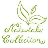naturlig samling Royaltyfria Bilder