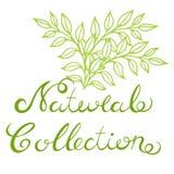 naturlig samling Arkivfoto