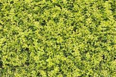 Naturlig sidabakgrund Royaltyfria Foton