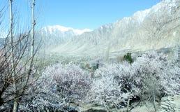 Naturlig sikt för vinter av frostiga träd för vinter royaltyfri fotografi