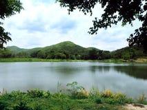 Naturlig sjö i skogen Royaltyfri Fotografi