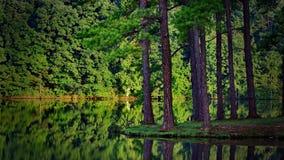 naturlig skönhet Arkivfoton