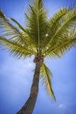 Naturlig skönhet av våra palmträd i Florida fotografering för bildbyråer